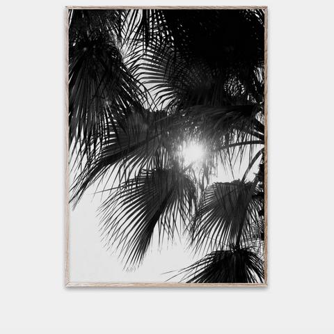 Bilde av Palm Trees 50 x 70 cm